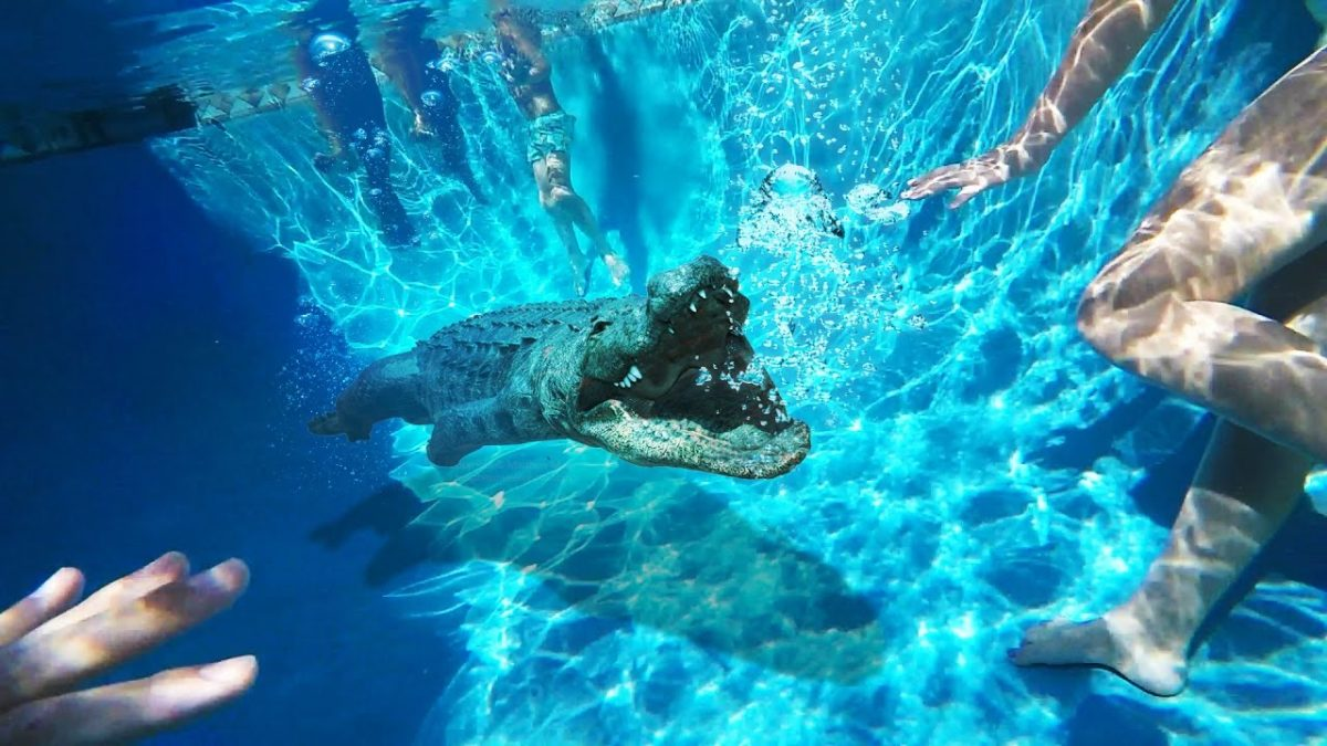 Unwelcome Alligator Goes Swimming In Family Pool!!
